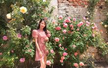 """Giàn hoa hồng trước sân nhà với cả nghìn bông rực rỡ trong nắng của chồng để """"tỏ tình"""" với vợ"""