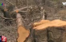 """Tướng Rơi chính thức phản bác thông tin """"VTV dàn dựng cảnh phá rừng"""""""