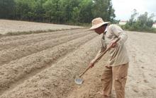 Sẽ xây dựng cánh đồng chuyên canh lớn Gò Nổi