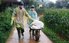 Yên Bái: Dịch tả lợn châu Phi lây lan sang huyện Trấn Yên và Văn Chấn